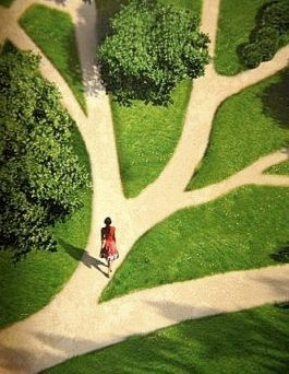 arbre de vie ou choix de vie