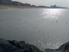 Nic Ostende 24.3.18 30
