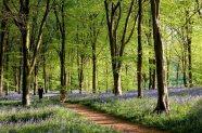les plus beaux bois du monde 4