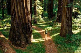 les plus beaux bois du monde 2