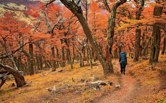 les plus beaux bois du monde 5