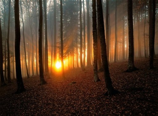 les plus beaux bois du monde 7